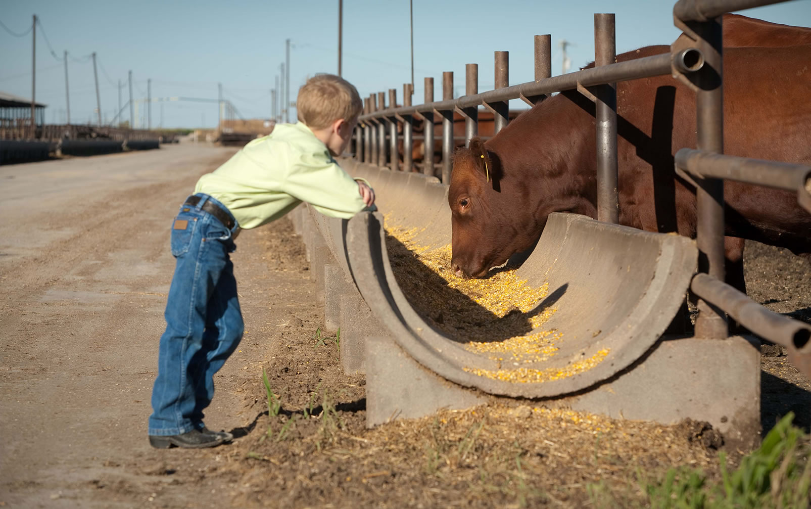 Boy at Feedyard